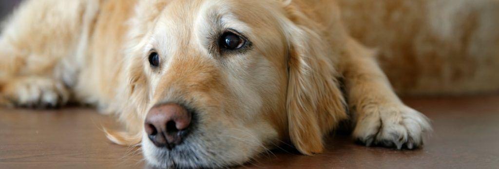 Vet treatment for arthritis in pets